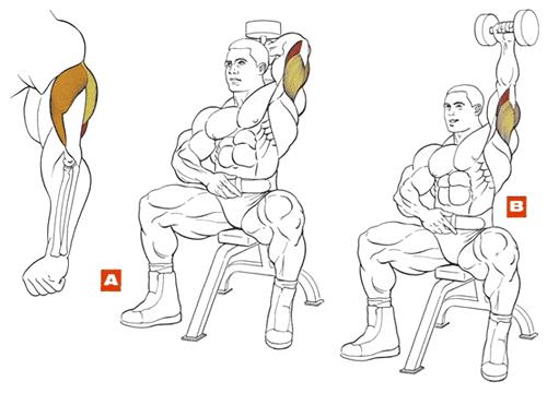 Упражнения для рук мужчинам в домашних условиях