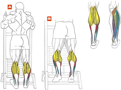 Как подкачать ноги в домашних условиях икры