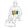 Скручивание на римском стуле
