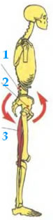 Разрывы седалищно-подколенных мышц