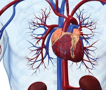 Специфика боли в области сердца и ее различия