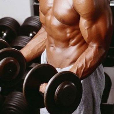 Несколько фактов о том, как набрать мышечную массу