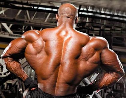 Как накачать спину  - тренировка мышц спины